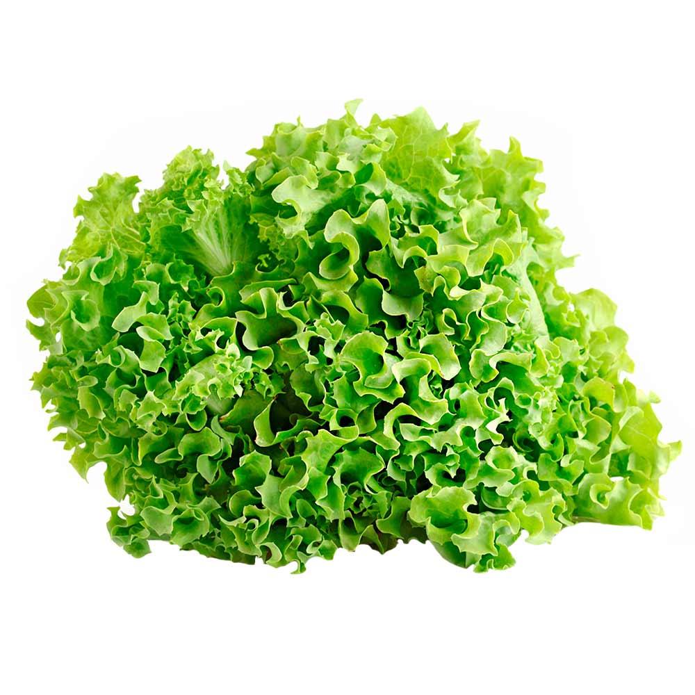 Resultado de imagen para lechuga verde